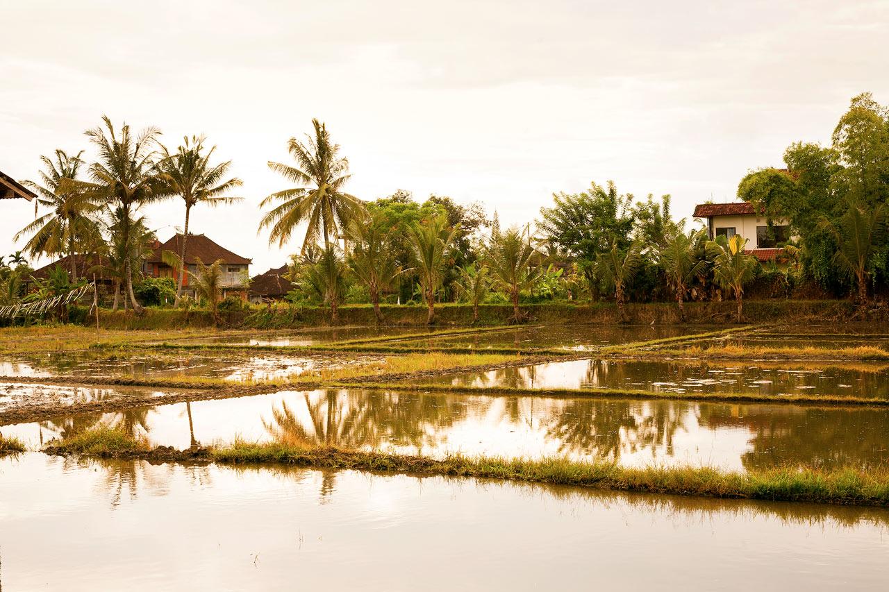 Indonesia - Ubud
