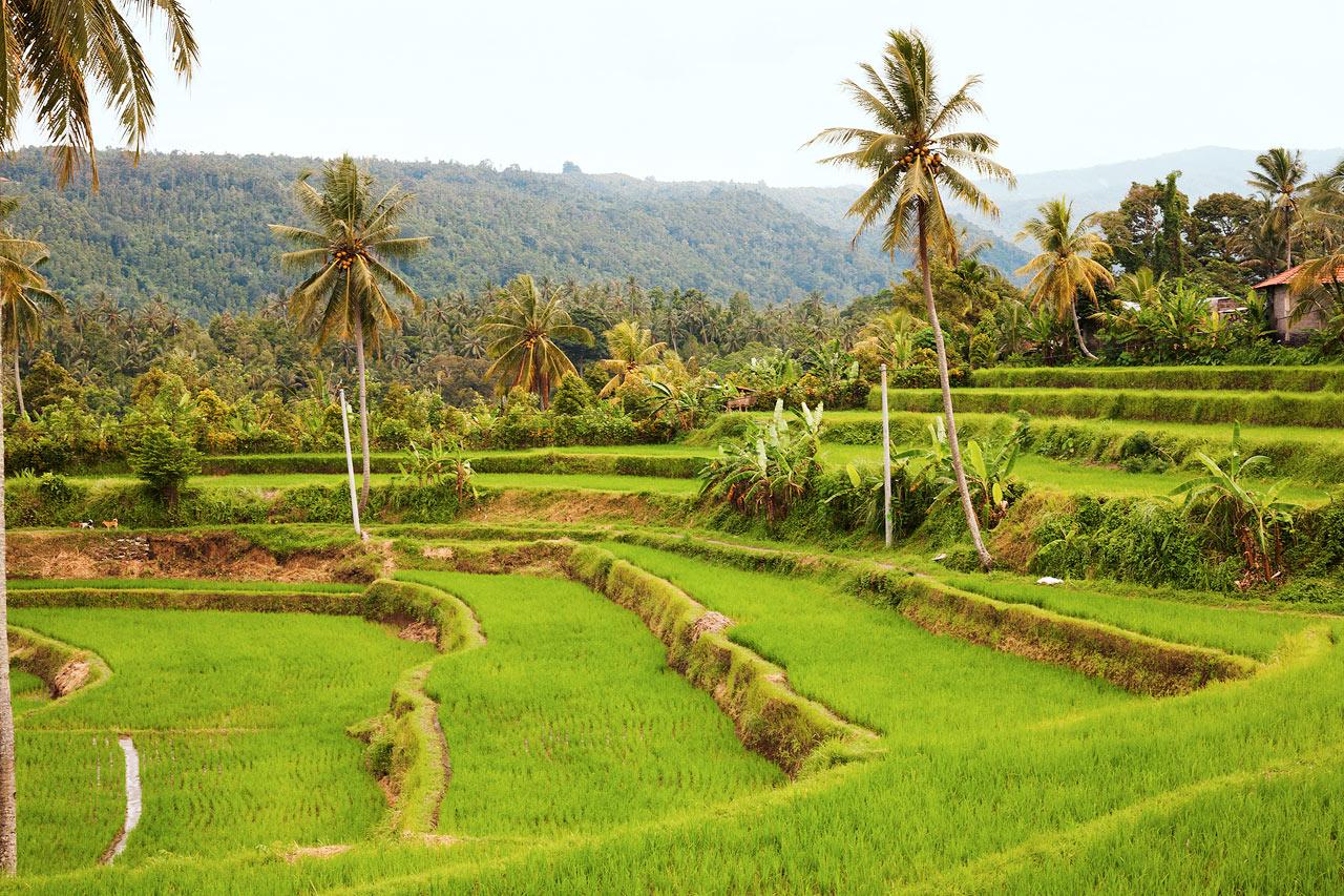 Indonesia - Ubud, Bali